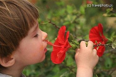 fdz_wacham_kwiat