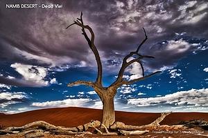 Pustynia Namib – Dead Vlei i światło